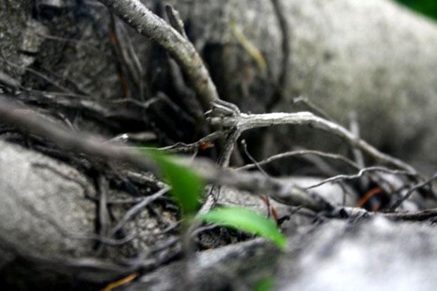 ענפים. צילום אורית פז, קורס צילום למתחילים