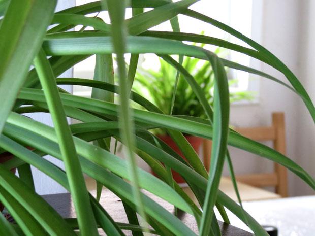 צילום מקרוב של הצמח מטשטש את הרקע. אפרת פריד קורס צילום