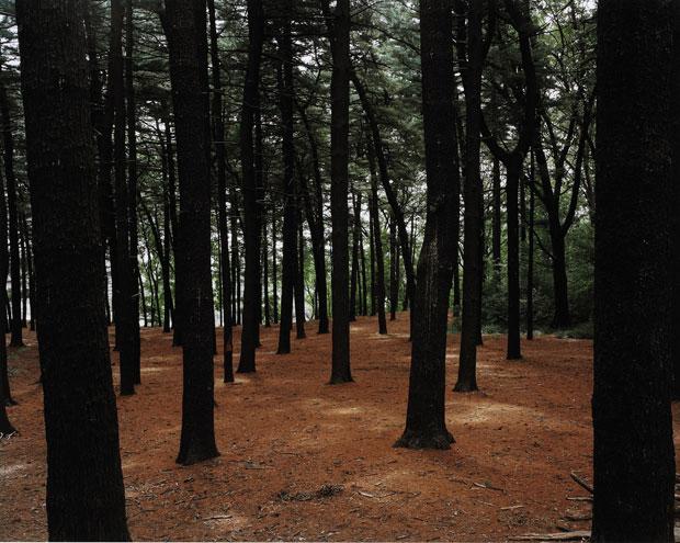 ג'ואל-מאיירוביץ-Forest-Park,-Queens