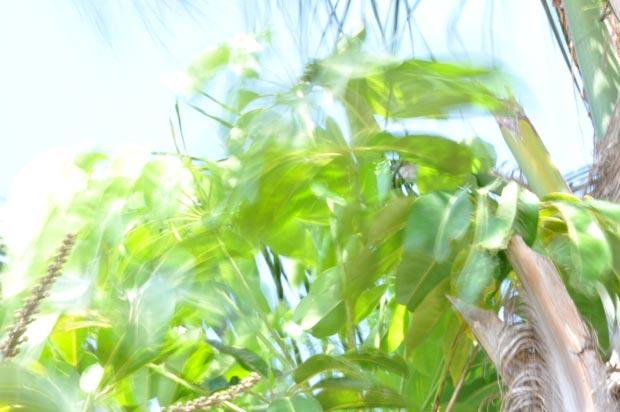 תמונה של ירון עזריה מקורס צילום, מריחת תנועה