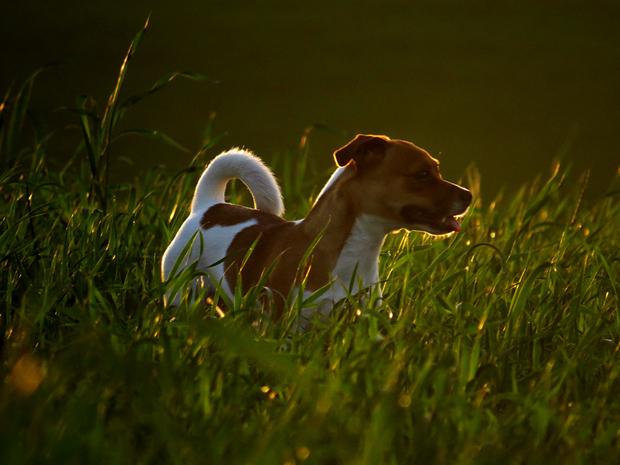 צילום-בחשיפת-חסר-טל-חיות--קורס-צילום-למתחילים