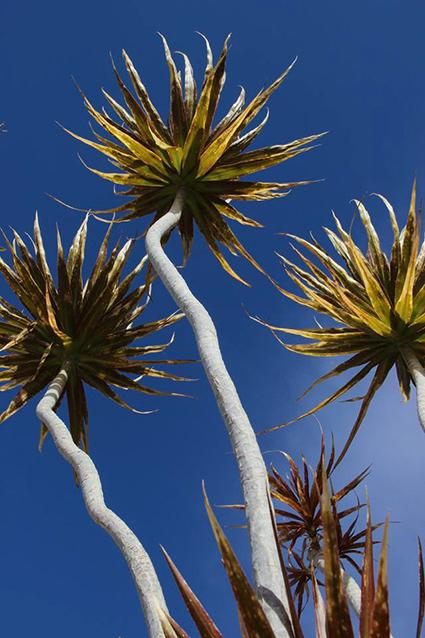 צילום מלמטה של צמח