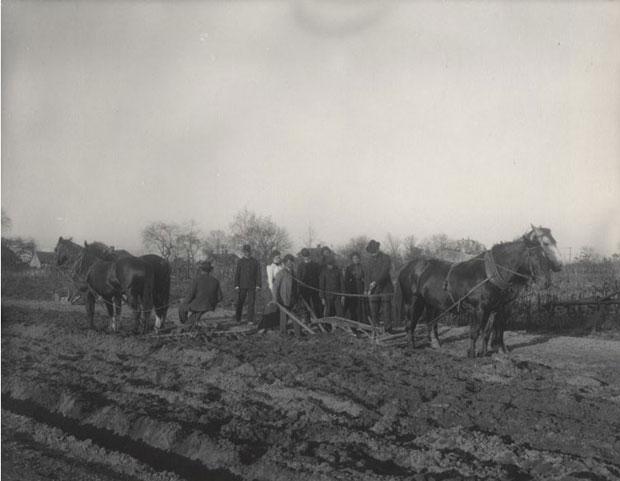 מאמר על הצלמת פרנסיס מרגרט ג'ונסטון-צילום-של שיעור חקלאות
