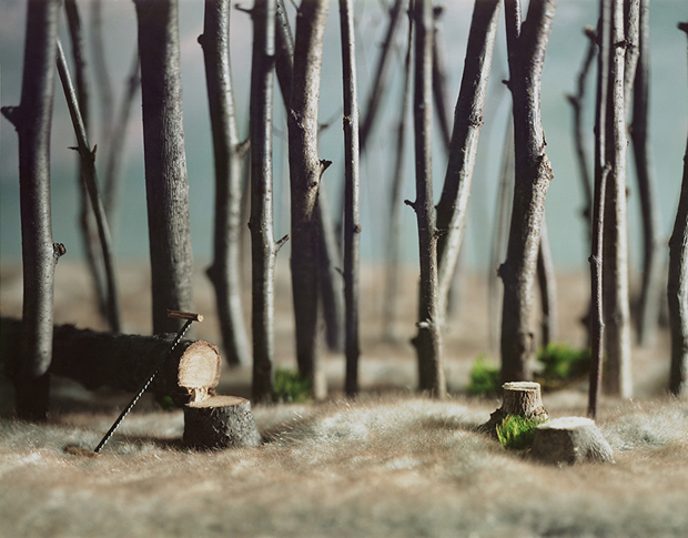 Forest, צילום של אריקה רו מתוך O PIONEER